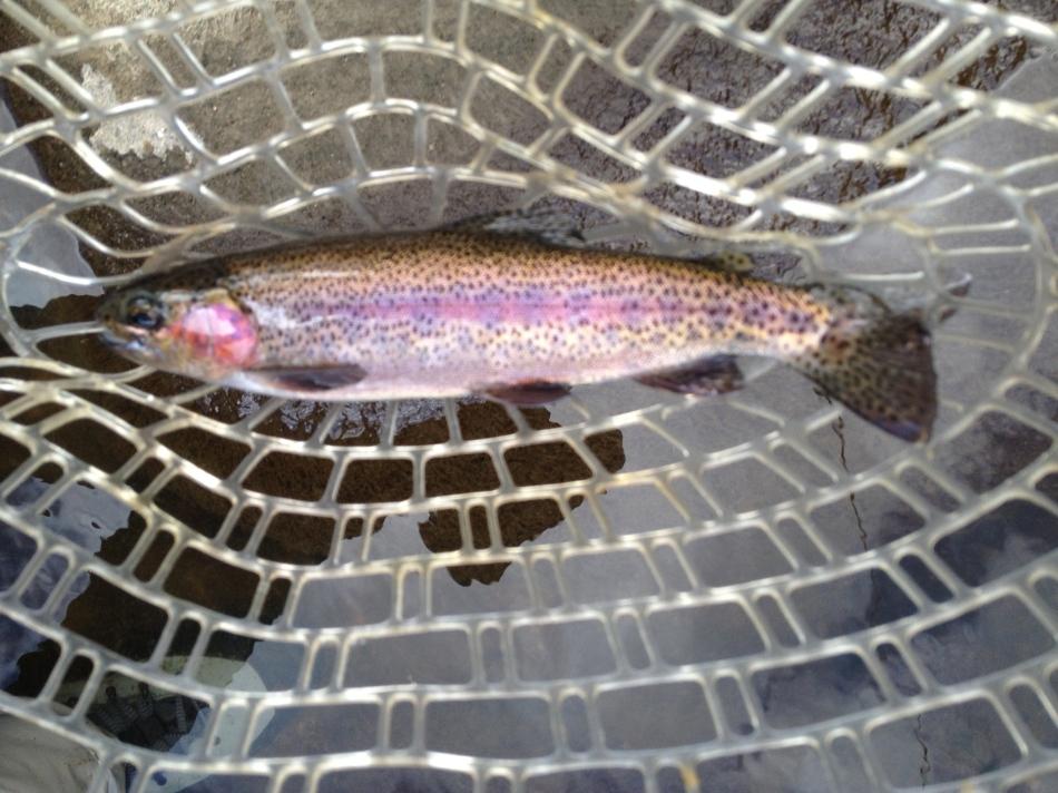 Nice fishing